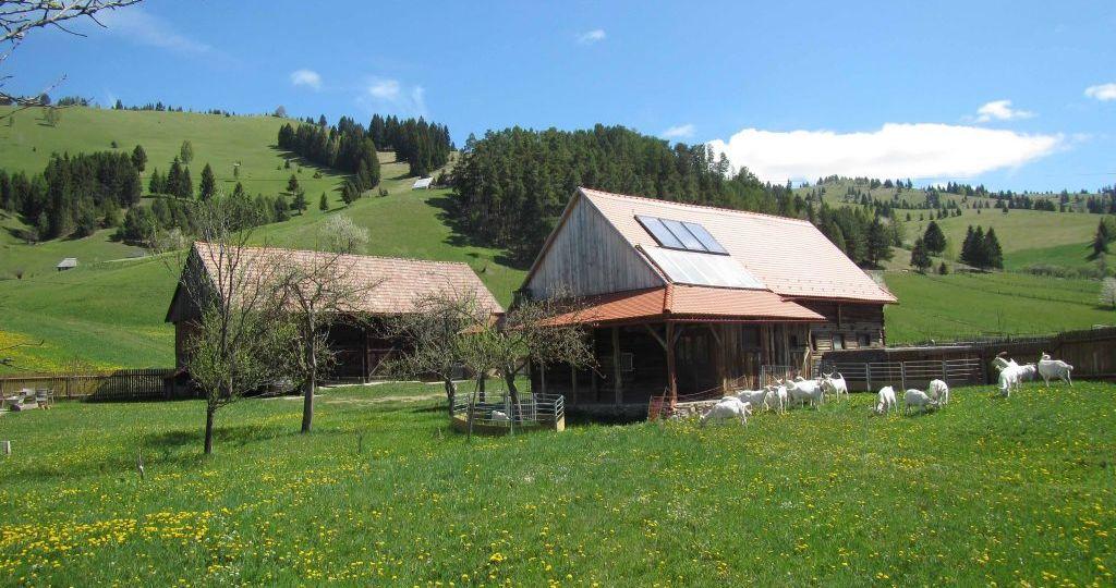 goat-farm-1024x768
